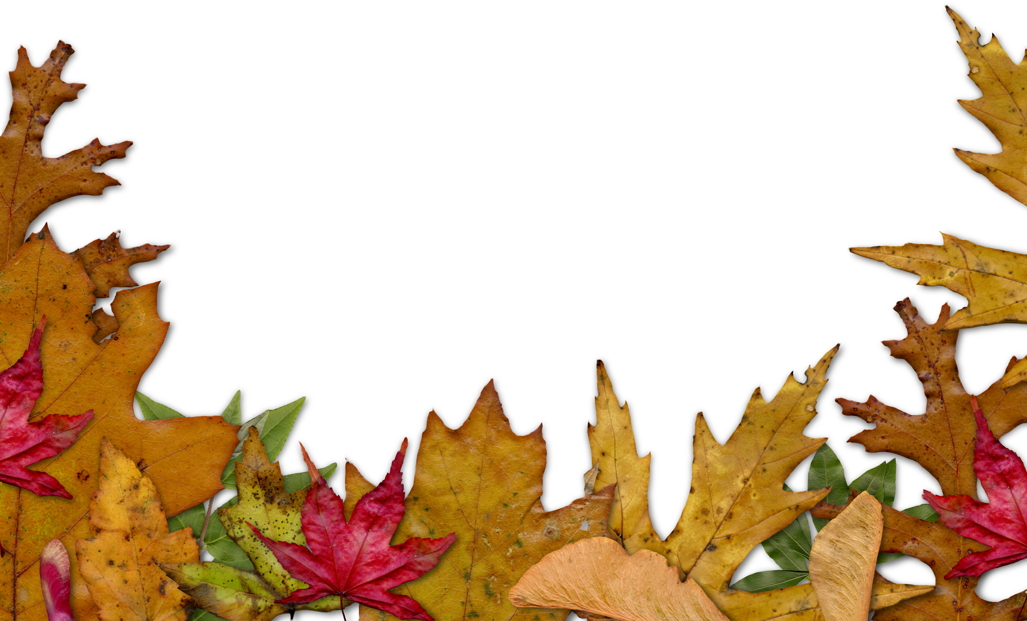 freebie: fall leaves edger