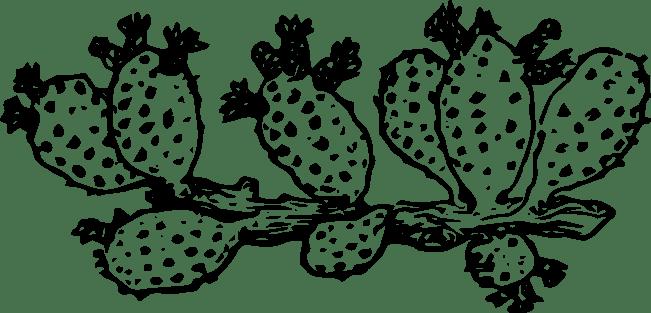 https://cesstrelle.files.wordpress.com/2015/07/hg-cactus.png?w=652&h=313